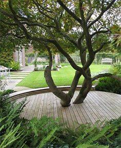 træer i haven