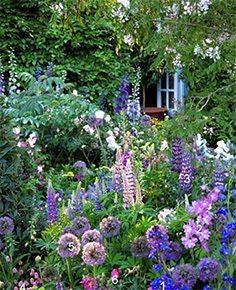 lilla blomster i haven